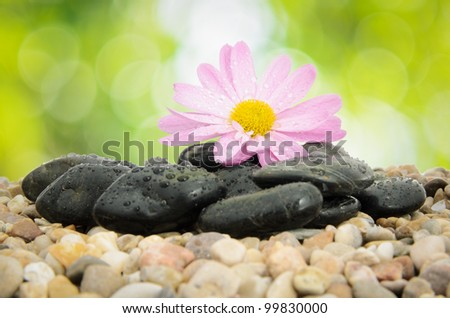 Wet spa pebbles and pink flower on nature green blur background.