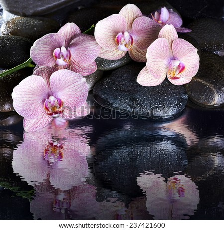 Wet spa pebbles and pink orchids with reflection - stock photo