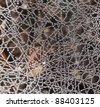 Wet spider web, extreme close-up - stock photo