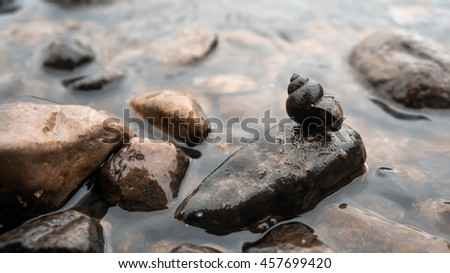 wet stones lie on the bank of the river, dark, brown, black, on one stone, empty shell cone