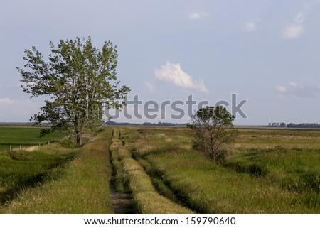 Wet tractor tire tracks in Saskatchewan Field` - stock photo