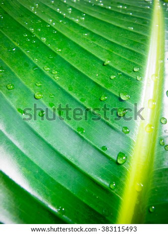 Wet tropical leaf background