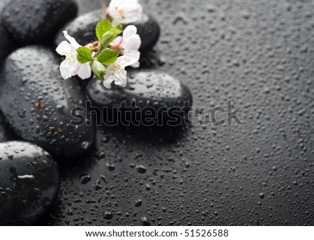 Wet Zen Spa Stones with spring blossom.Selective focus - stock photo