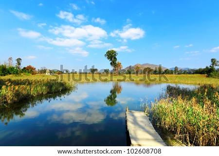 Wetland - stock photo