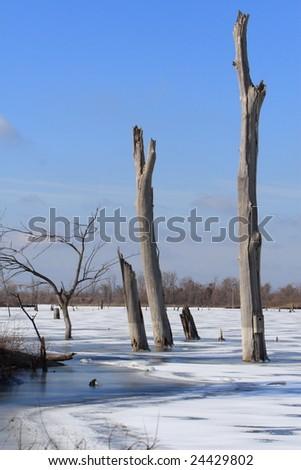 wetland at winter - stock photo