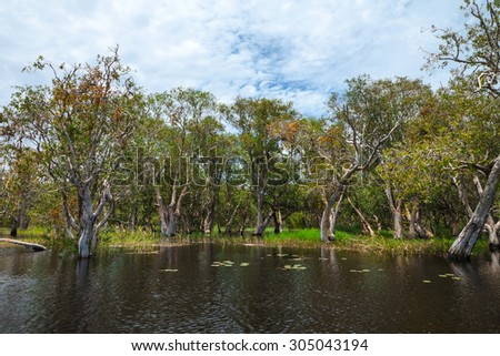 Wetland in Rayong Botanical garden, Thailand ( Melaleuca or Paper bark tree forest )
