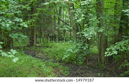 Wetland with dried forest stream in foreground - stock photo