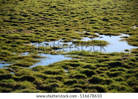 Wetland with green tufts and open water