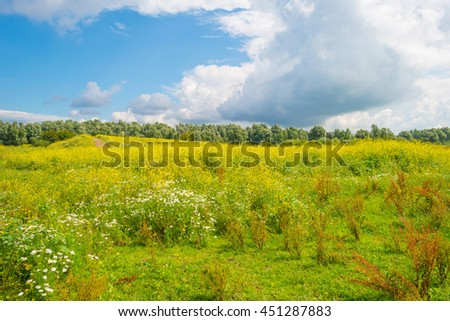 Wetland with wild flowers in summer