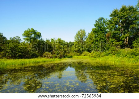 wetlands and green forest - stock photo