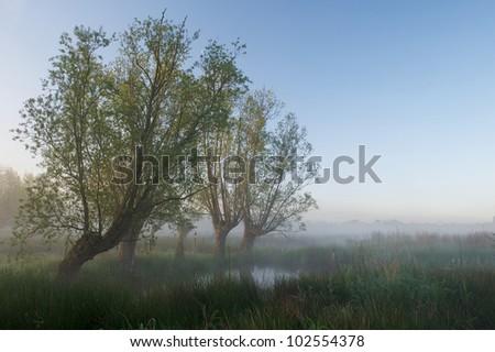 Wetlands Ghent Belgium - stock photo