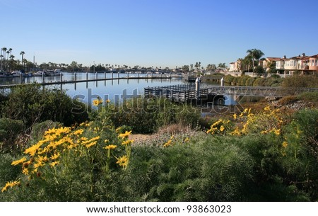 Wetlands in a nature park, Long Beach, CA - stock photo