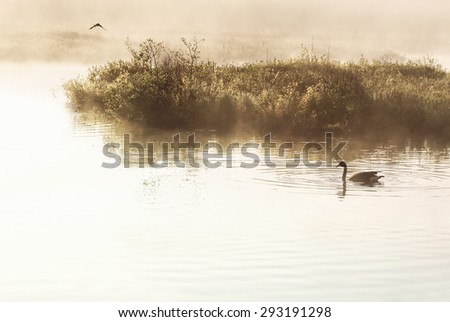 Wetlands in early morning. Misty fog surrounds marshland as a one Canada Goose swims along in quiet solitude - stock photo