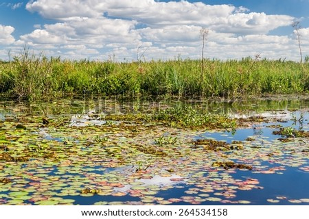 Wetlands in Nature Reserve Esteros del Ibera, Argentina - stock photo
