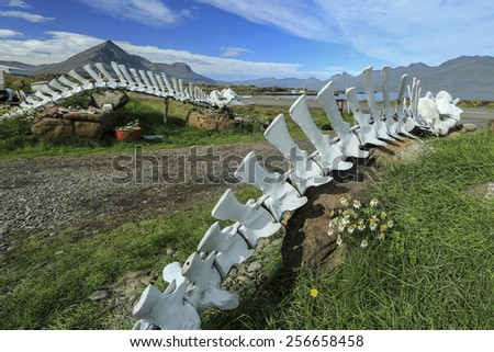 WHALE BONES, WHITE SKELETON ON ICELAND - stock photo