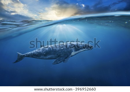 whale in half air half sky - stock photo