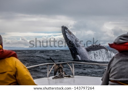 Whale jump - stock photo