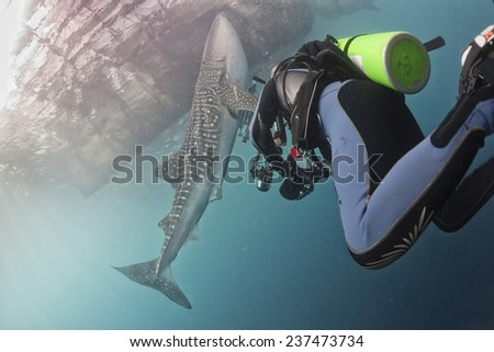 Whale Shark close encounter underwater in Papua - stock photo