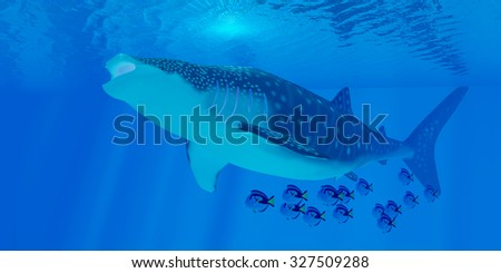 Whale Shark Feeding - Whale sharks are the largest shark in the ocean but feed on the smallest plankton creatures. - stock photo