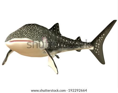 Whale Shark Profile - The Whale shark is a slow-moving filter feeder and can grow up to 12.65 meters or 41.50 feet. - stock photo