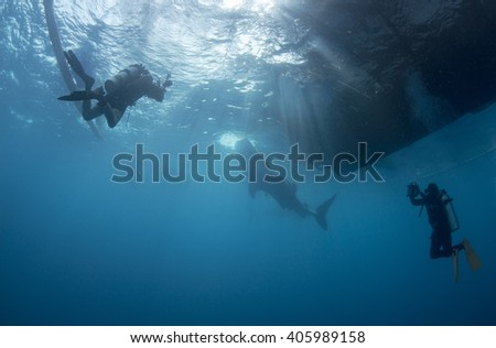 whale shark watching in West Papua New Guinea