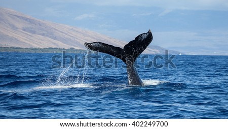 Whale Tail with water cascading off - stock photo