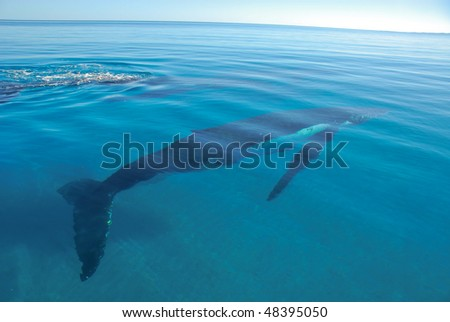 Whale under the sea