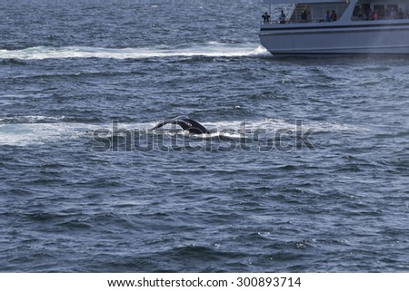 Whale watching experience off the coast of Atlantic.