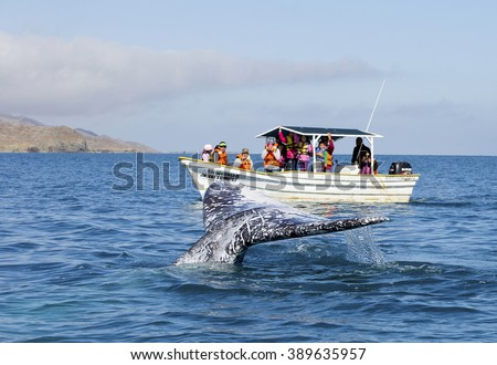 WHALE WATCHING TOUR IN BAJA, CALIFORNIA, MEXICO - February 20, 2015: Whale watching in Ojo De Liebre Lagoon in Baja, California, Mexico