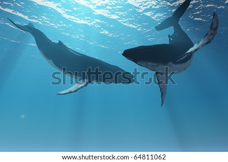 WHALE WONDERS - Two Humpback whales frolic in the rays of light from the sun. - stock photo