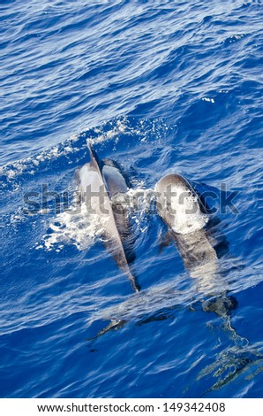 Whales - stock photo