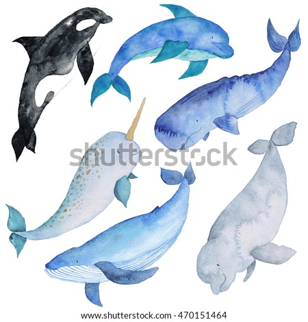 Dolphin Pictures also Ticket Baby Shower Invitations ALL COLORS With CLIPART No Photo additionally Clipart Elefant 1 likewise Anime Little Girl Crying Before Broken 233136934 furthermore All Kinds Of Dogs. on small cartoon whale