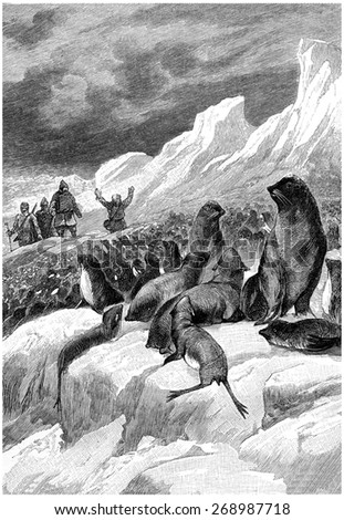 What surprised them, it was the incredible amount of seals, vintage engraved illustration. Jules Verne Cesar Cascabel, 1890. - stock photo