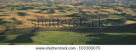 Wheat and Barley, S.E. Washington - stock photo