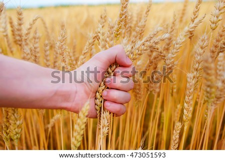 Wheat and hands