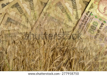 Wheat and Indian Money or currency in double exposure shot, demonstrating earnings or spend in Agriculture - stock photo