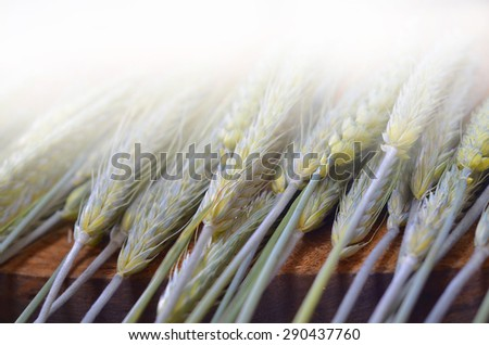 Wheat and rye on wooden background - stock photo