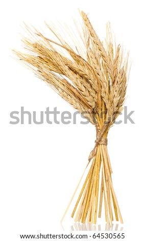 wheat bunch isolated on white