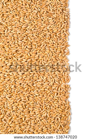 wheat dinkel close-up isolated on white background with clipping path
