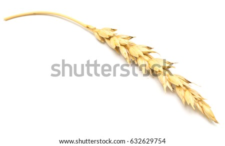 wheat ear isolated on white background