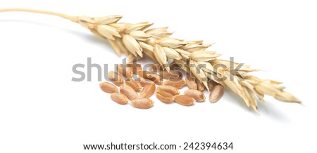 wheat ears and grain isolated on white background - stock photo