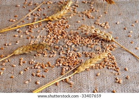 wheat ears and seeds on burlap background