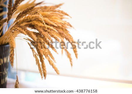Wheat Ears in pot on the Wooden Table. Sheaf of Wheat over white Background in the coffee shop. - stock photo
