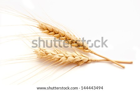 Wheat ears isolated on a white background - stock photo