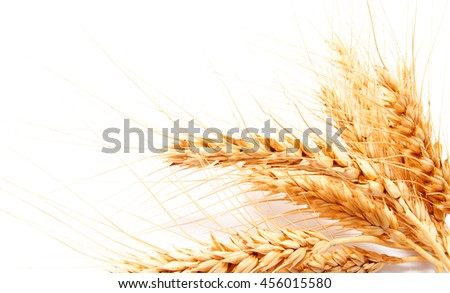 Wheat ears isolated on a white background closeup - stock photo