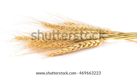 Wheat ears isolated on white background