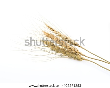 wheat ears isolated on white background, stacking focus added