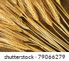 Wheat ears on a burlap background - stock photo