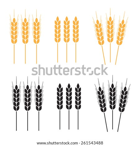 Wheat ears or rice icon set. Agricultural symbols on white background. Design elements for bread packaging or beer label.  - stock photo