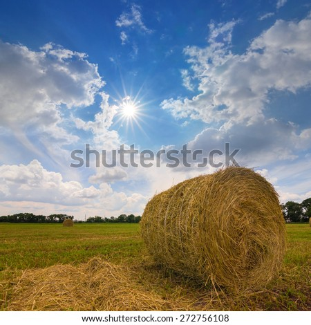 wheat field after a harvest
